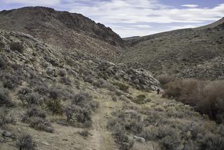 Across Diamond Creek