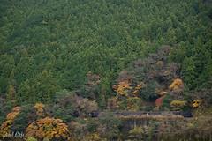 色とりどりの森を... (Running in a colorful forest) by Noël Café