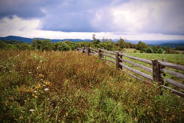 Mountain Meadow, Blue Ridge Parkway, NC, 2016