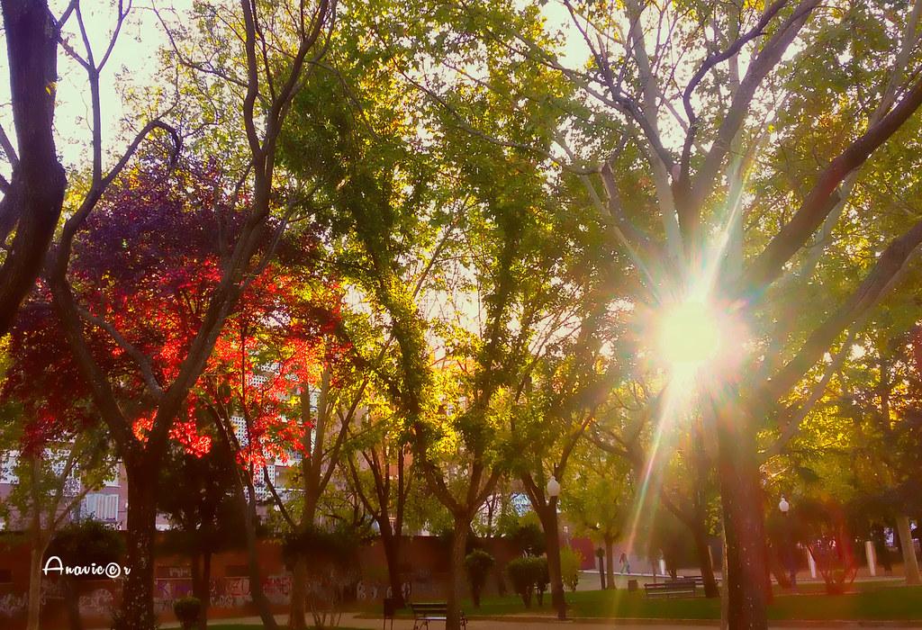 Park colors