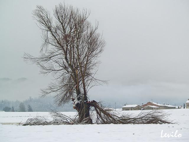 El árbol herido
