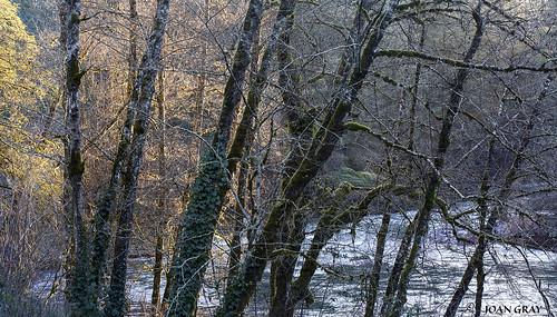 littlenorthsantiamriver littlenosantiamriver river riverbank