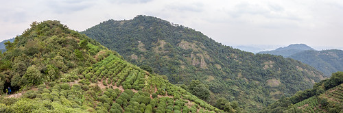 agriculturallands agriculture ecology ecosystem environment environmentalism hills land nature scenery teafield hangzhou zhejiang china