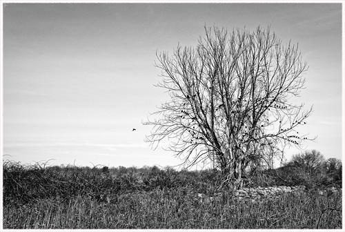 blackandwhite tree birds abandoned nikon d750 dslr nikond750 monochrome bw 1835mm wide zoom naked farm overgrown branches perkins mystic connecticut ekkidee