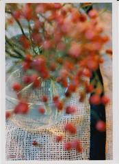 赤い実の話 (A red seed) 2 by Noël Café