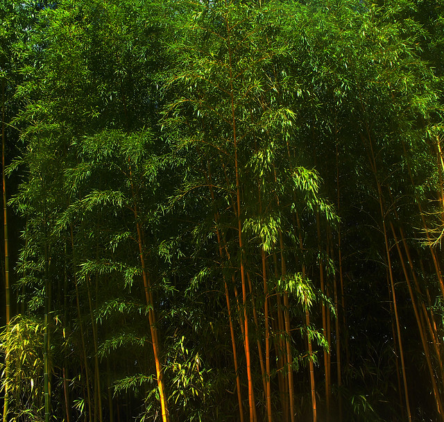 Bamboo Forest 🌍 Le Pal, France 🎎 Happy New Chinese Year