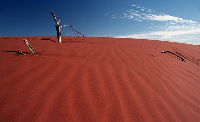 Dune Snag #1