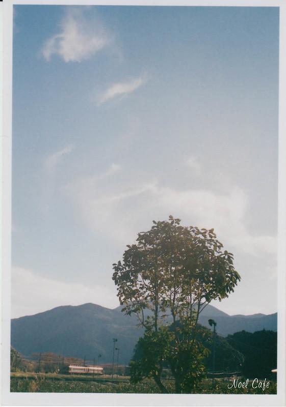 秋の朴の木 by Noël Café