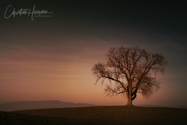 lonely tree in sunset, Switzerland