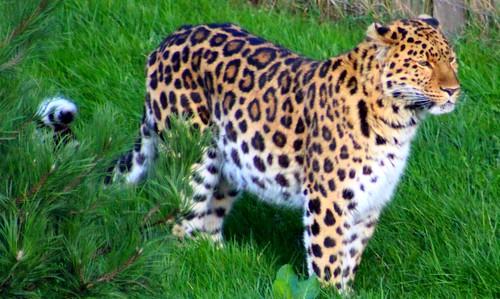 yorkshirewildlifepark doncaster southyorkshire england uk ywp wildlifepark wildlife parks