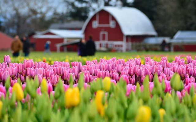 Spring in the Skagit Valley