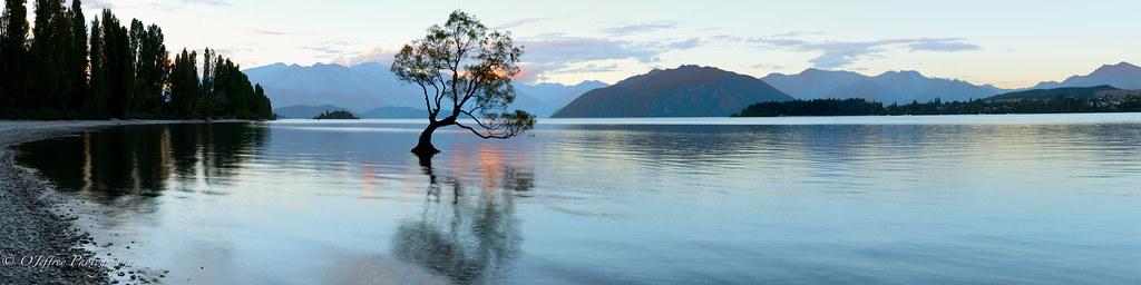 "Evening at ""The Wanaka Willow"""