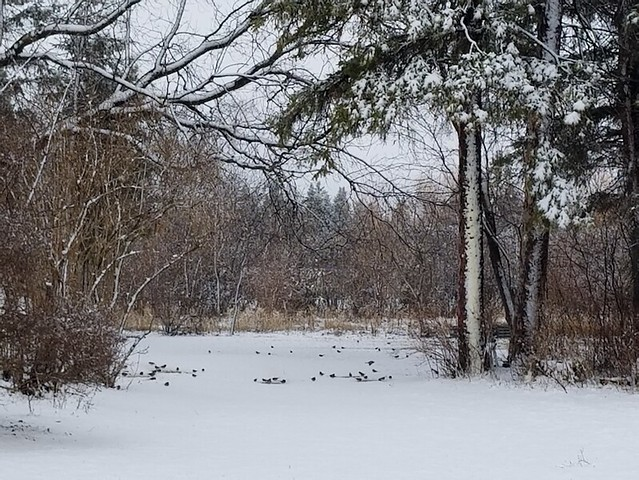 20190415.spring.snow.juncos