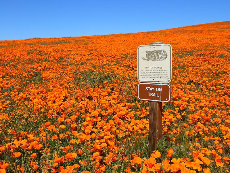 IMG_0916 Antelope Valley California Poppy Reserve