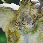 Garden Angel Bokeh |  15. April 2019 | Tarbek - Schleswig-Holstein