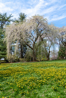 LongwoodGardens_04_13_2019_DSC-3743 | by Jeff Adukinas Photography