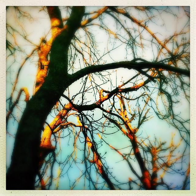 Trees aglow.