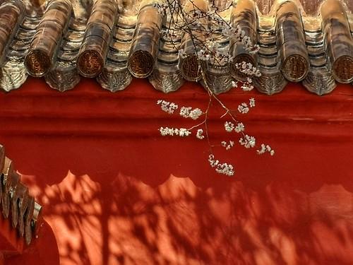滿園春色擋不住 , 一支紅杏出牆來 | by pestokill