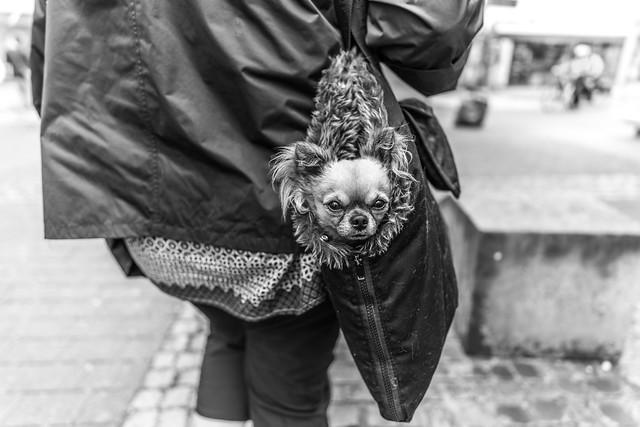 Is it a bag, is it a assessory or is it a pet?