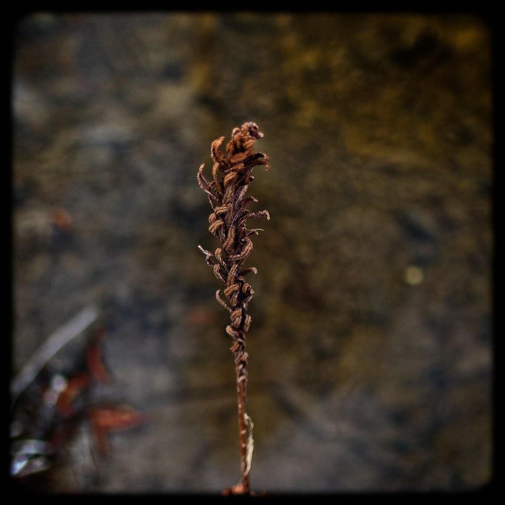 Old fern