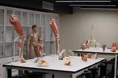 Prof. Dr. Nurettin Ali BERKOL Anatomi Maket Laboratuvarı 8