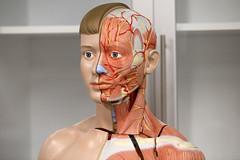 Prof. Dr. Nurettin Ali BERKOL Anatomi Maket Laboratuvarı 7