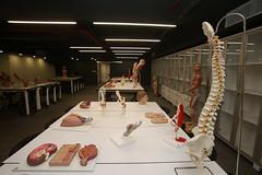 Prof. Dr. Nurettin Ali BERKOL Anatomi Maket Laboratuvarı 3