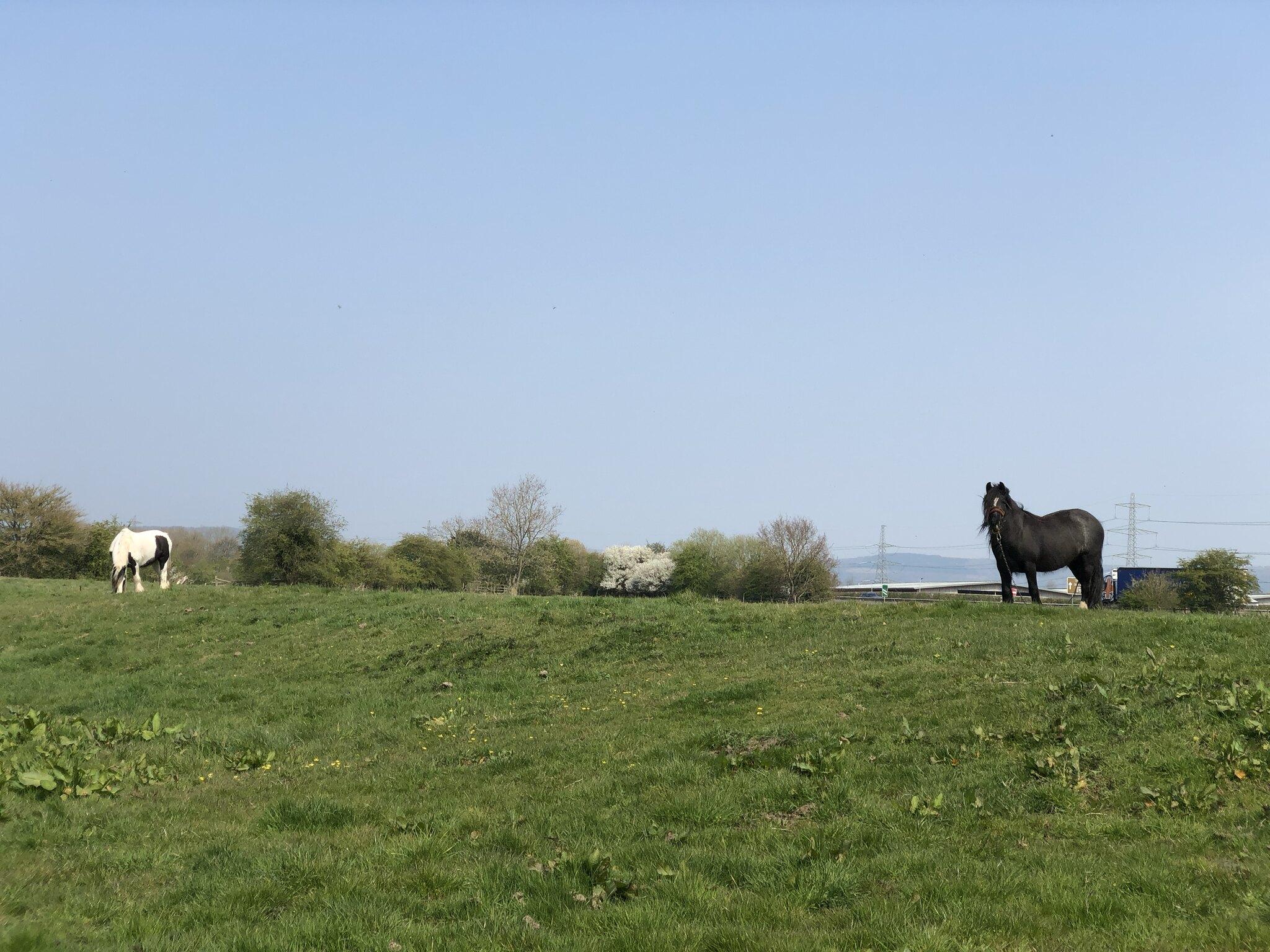 Thirsk Walk - Funny Horses