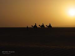 Desert_011