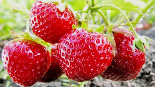 6-Strawberry-Foto-YuriyS Getty-Images-iStockphoto