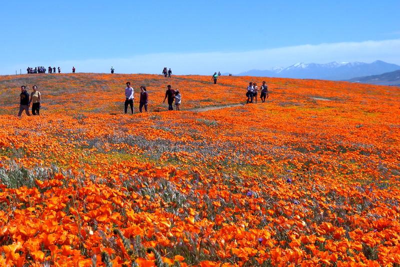 IMG_6498 Antelope Valley California Poppy Reserve