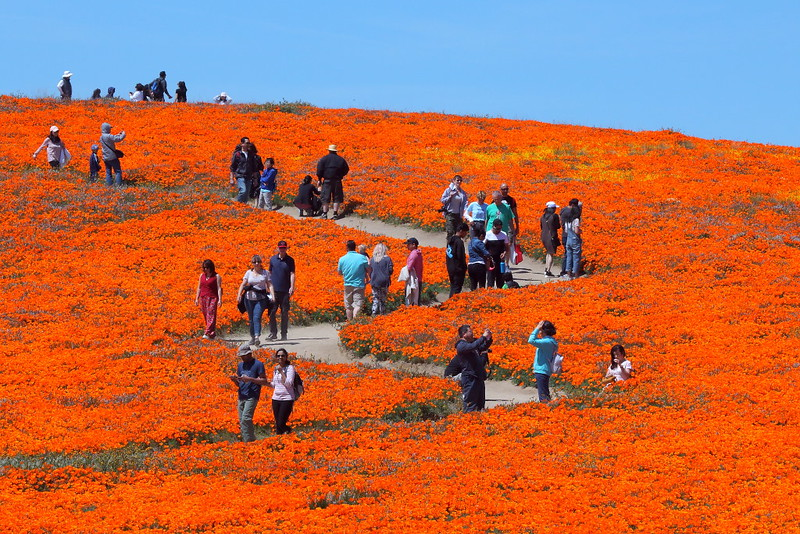 IMG_6284 Antelope Valley California Poppy Reserve