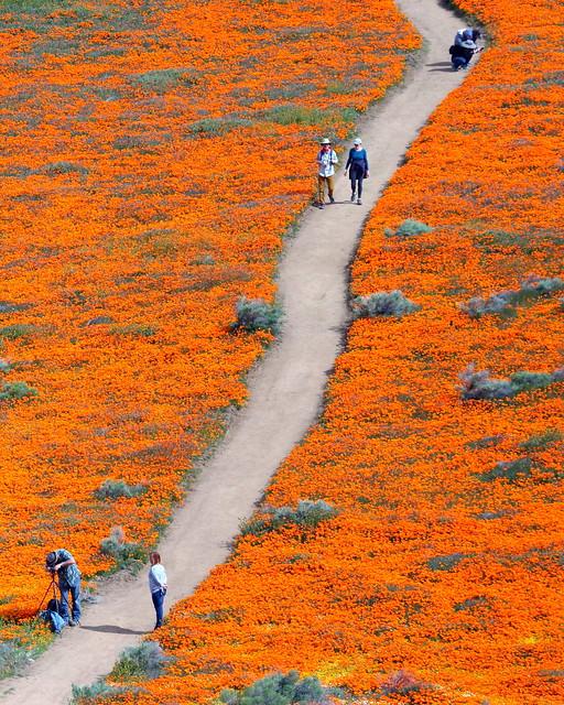 IMG_6183 Antelope Valley California Poppy Reserve