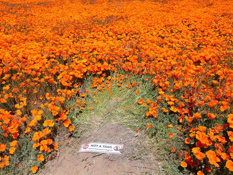 IMG_1032 Poppy Field Damage