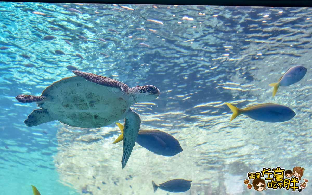 沖繩美麗海水族館-71