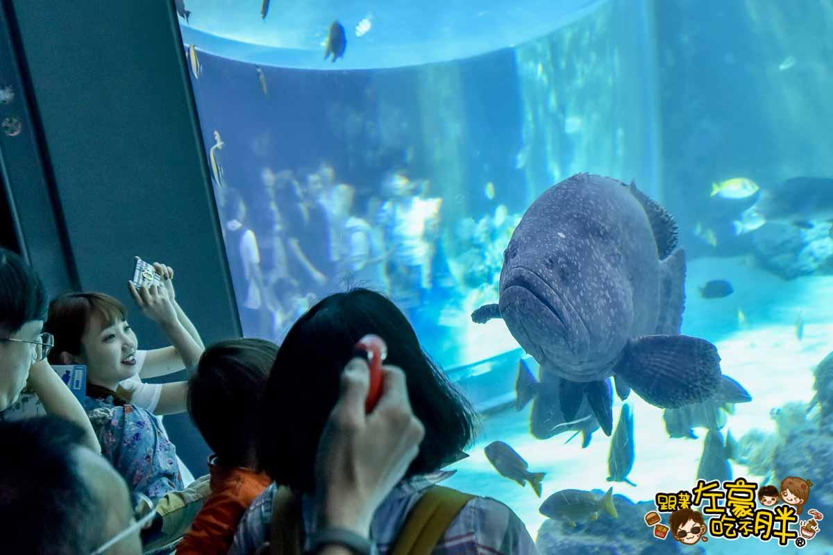沖繩美麗海水族館-70