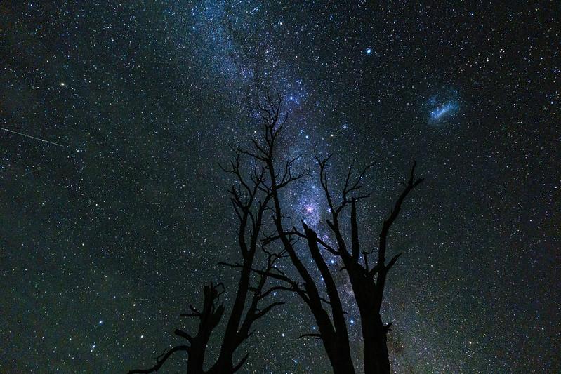 Dead Tree and Milky Way