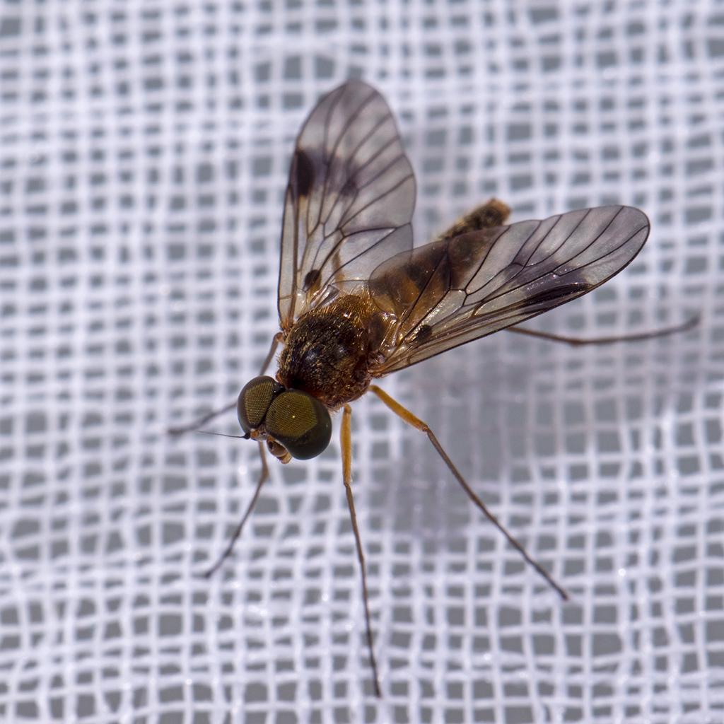 Macros/  proxi/  insectes  - Page 20 32696211337_3da05ba7c9_o