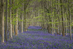 Nore Wood