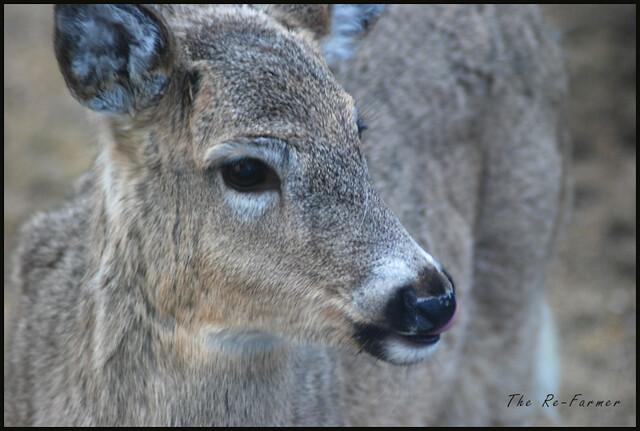 2019-04-08.deer.blep