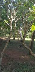 """""""Nous avons fait de la sensibilisation pour la conservation des lémuriens auprès de plusieurs écoles, les enfants étaient attentifs et intéressés, c'était chouette à voir"""" - Florence"""