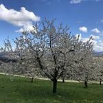 2019-04-17 Schwarzbuebeland_Fred (60)