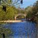 The River Wharfe at Ilkley, today ! by maraymondo 1