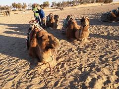 Travesia en camellos al Desierto del Sahara Douz Tunez 04