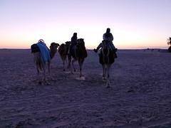 atardecer ruta en camellos al Desierto del Sahara Douz Tunez 06