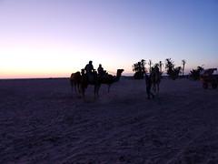 atardecer ruta en camellos al Desierto del Sahara Douz Tunez 03