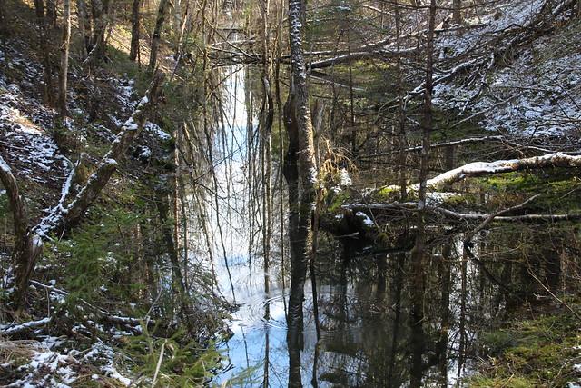 Selles eestiaegses veotranšees sõitis kunagi põlevkivirong / Abandoned haulage trench af oil shale mine in Estonia