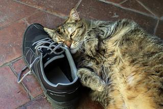 Alice loving dad's shoe | by Alfredo Liverani