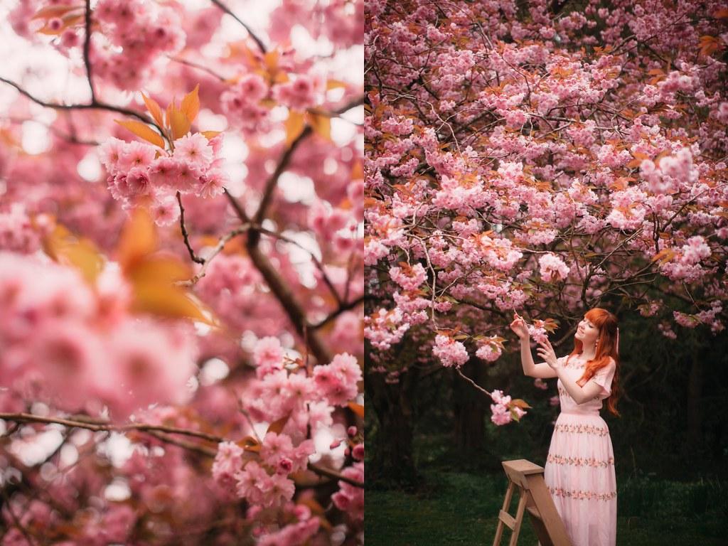 cherry blossom-42-side