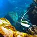 d3_plus posted a photo:ツノダシ, Moorish Idol,ソラスズメダイ, Heavenly Damselfish,ハリセンボン, Balloon Porcupinefish,川奈港, Port KAWANA,東伊豆, East IZU,190105. #nikon #izu #Snorkeling #light_nikonNIKON 1 J4 + 1 NIKKOR VR 10-30mm f/3.5-5.6 PD-ZOOM + WP-N3